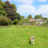 Dogsitter needed for 1 month in Dartmoor National Park village