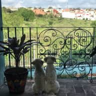 Housesit in beautiful San Miguel de Allende, Mexico