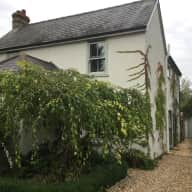 Cat and house sitter in Foxton, a delightful village a few miles from Cambridge.