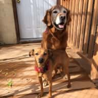 Dog sitter needed for 2 dogs in Dillon, Montana in June