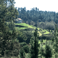 Quinta do Pinheiro, Tabua Central Portugal.