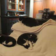 Looking for house sitter to look after 3 delightful cats