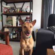 Seeking a dog sitter for our lovely Molly in Singapore