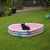 Pet sitter required for first 2 weeks of August to look after 2 male cats