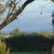 Whippet care in Llyn Peninsula