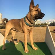 Dog sitter for young pup in Kobe