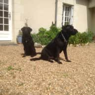 Dogs, cat & chickens looking for a sitter in the Maine et Loire region of France for Xmas/New Year with flexibility on actual dates.