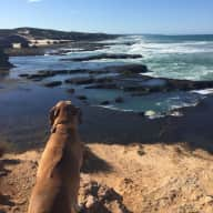 Caring dog lover for gentle , docile Rhodesian