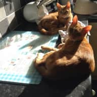 House/Pet Sitter required for April 2018 for 2 cats
