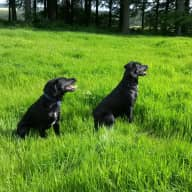 We can't bear to put our lovely dogs into kennels. If you'd like a quiet few days in the beautiful North Yorkshire countryside then you're in luck!