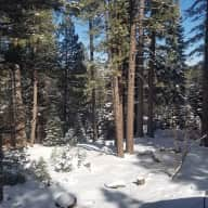 Dogsit in Truckee, Near North Lake Tahoe