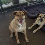 Rosie & Rusty