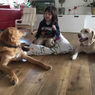 Sitter needed for 2 Dogs/1 Cat on the outskirts of Hamburg