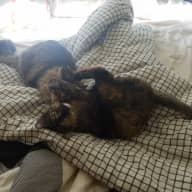 Meet our cats Cleo and Sanja in a quiet townhome in the bay area