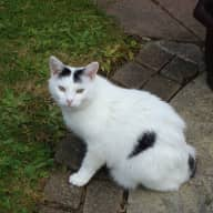 House and Pet sitter needed for our two cats in county Kildare