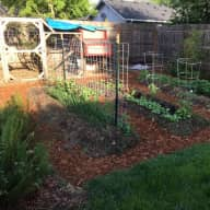 Quiet neighborhood, friendly pets, veggie garden and hens