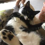 Pet sitter needed to look after 2 cats for one week in Terrigal
