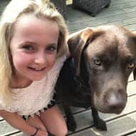 16 night house sit for loveable bouncy chocolate lab and sweet black cat.