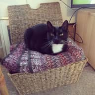 Cat sitter needed in a mews house in Kemp Town!