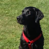 House & pet sitter to look after our home and adorable Labrador Alfie in an area of outstanding natural beauty