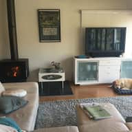 Caring lab lover and home sitter  needed