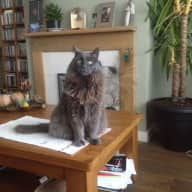 Cat sitter required for a really nice cat, whilst I'm on holiday