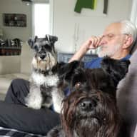 *URGENT* Look after our two Mini Schnauzers in Brighton - I do like to be beside the seaside