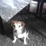 SITTER FOUND - Dog/house sitter needed for my 2 senior dogs November