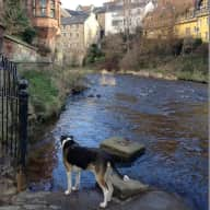 Edinburgh - looking for a pet sitter for our dog and cat, Friday July 7th to Sunday July 9th