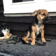 Pet & house sitter needed for appr. 3 weeks(november/december)in Pett Level, near Hastings