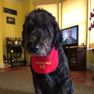 Dog and House Sitter required