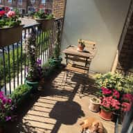 Lovely 12-yr old small dog, gorgeous terrace and a 2 bedrooms, close to Central London and Greenwich