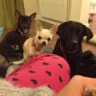 Housesitter required for 4 happy doggies and 1 grumpy cat