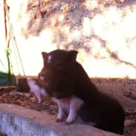 Last Minute: Rami the Dog and his Cat and Piggy friends need you to take care of them for seven weeks in beautiful finca in Southern Spain
