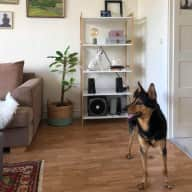 Apartment near sea in the beautiful city of Karlskrona with a wonderful dog and delightful cat