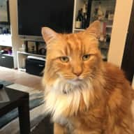 Cat sitter needed for 2 well behaved cats so their hard working owners can go on vacation :)