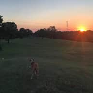 Dog and house sitting Deep in the Heart of Texas - (Austin)