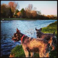 This listing isn't fulfilled!  I can't change the settings!  Dog sitting for dates 27-30 May 2016
