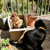 House/Pet Sitter needed for our two cats for 10 weeks in Autumn 2016 in the Cotswolds UK