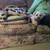 House and pet sit two small 11-year-old dogs