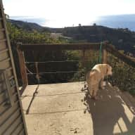 Malibu 180 degree ocean view Hiking and Labrador Heaven, 120 degree canyon view too