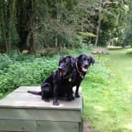 Pets sitter for 2 elderly cats and 2 friendly labradors