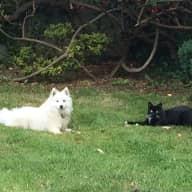 Petsitter needed for friendly animals in Shankill, Co Dublin, Irland