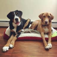 2 Fun Loving Dogs in need of a Sitter :)