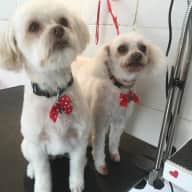 Need care for 2 small dogs.