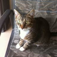Sitter needed for 2 cats in Merritt Island, FL