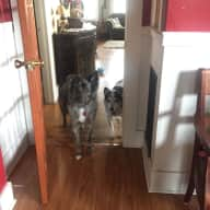 Great home and dogs in convenient location in Berkeley, California