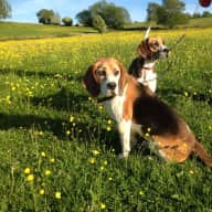 We have a lovely country home and two dogs needing care from time to time