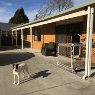 2 Weeks in a Central Christchurch Suburb with a Beautiful Rescue Dog