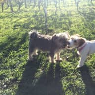 We need a loving person to care for our two little dogs at our vineyard property